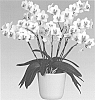 Phalaenopsis orchid plant named 'Prima Piano'