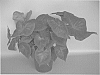 plant named 'UF-18-49'