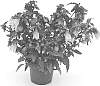 plant named 'PKMTAK3'