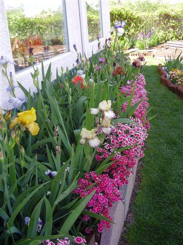 Tbphoto Companion Plants