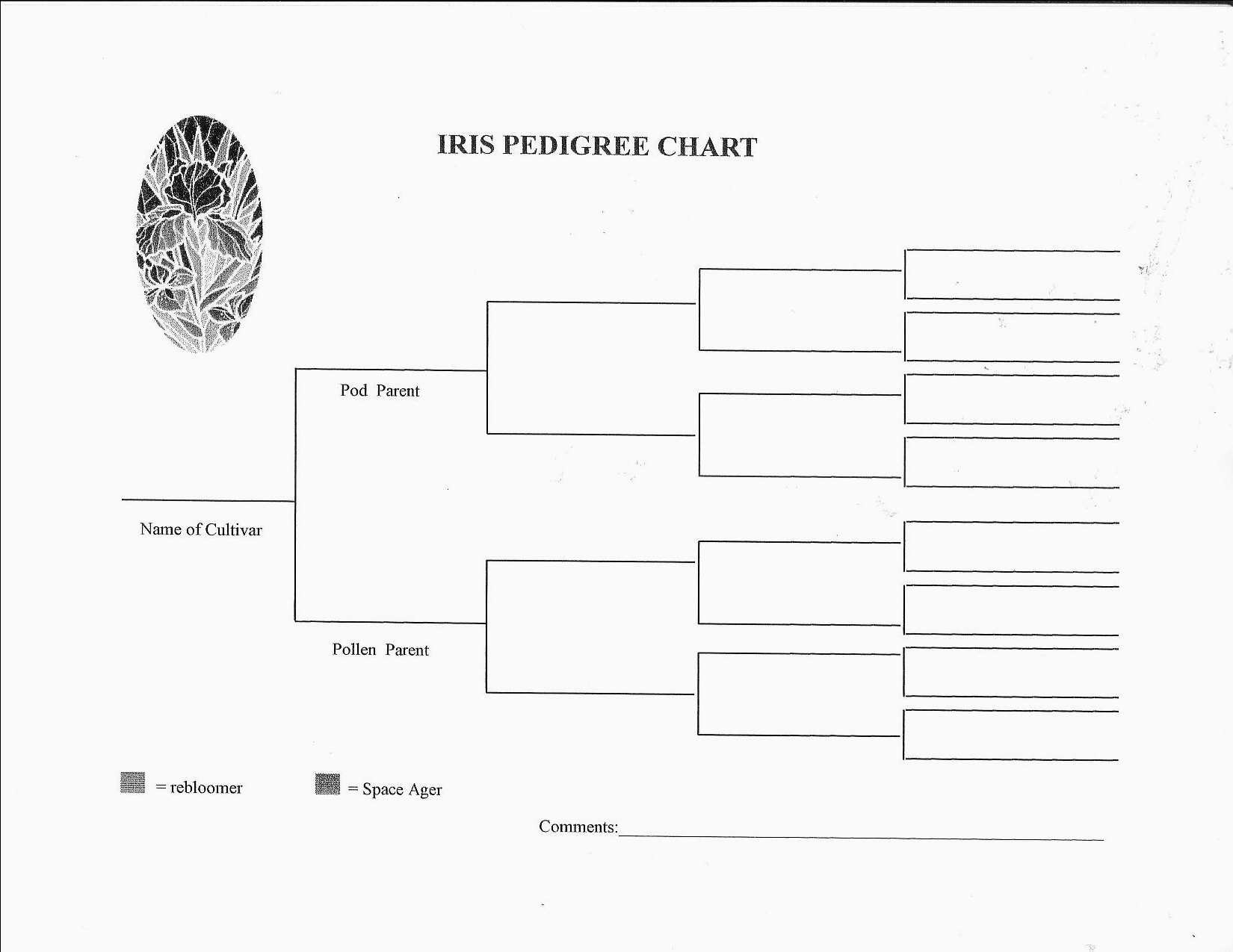 Re: Iris Pedigree - see blank chart /attachment